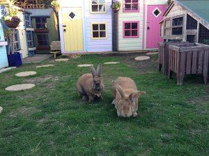 small-animals-boarding-rabbits